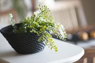 キッチンの観葉植物